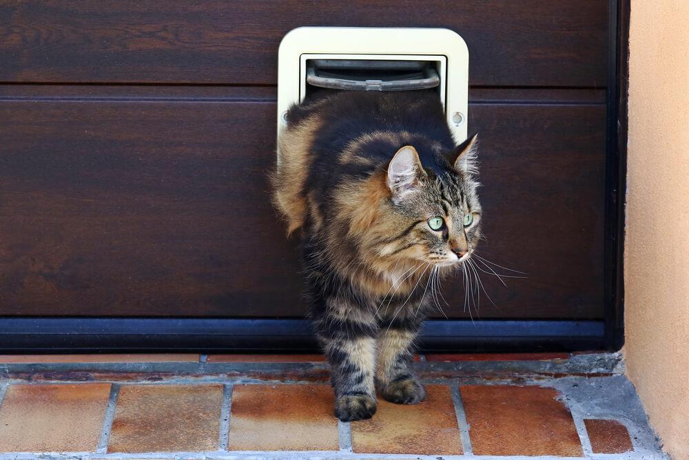 Katzen- und Hundeklappe