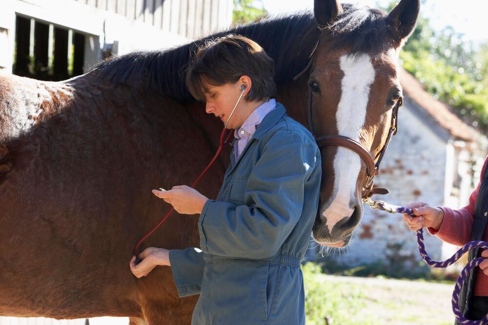 Frau hört krankes Pferd ab